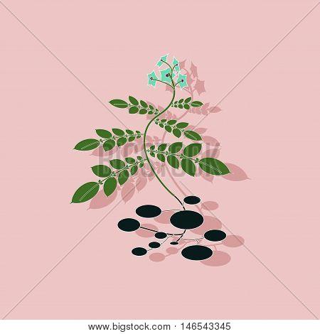 paper sticker on stylish background of plant Solanum