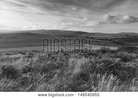 A Black & White evening shot from Rippon Tor on Dartmoor took with a slow shutter speed to emphasize the blustery wind in the grasses and plants.