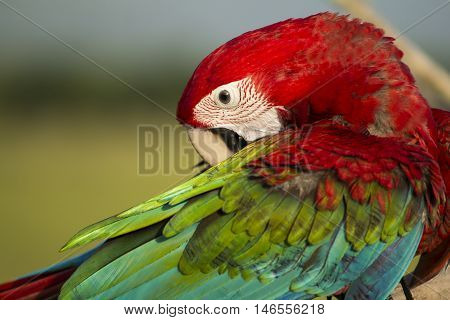 Face of parrot macaw background in the evening.
