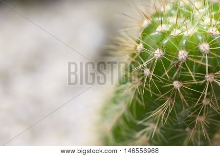 Close up small cactus in nature background