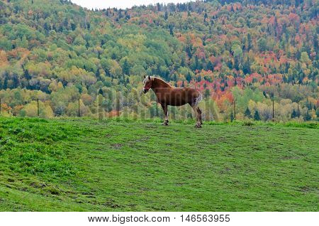 Brown horse on colorful trees background. Canada