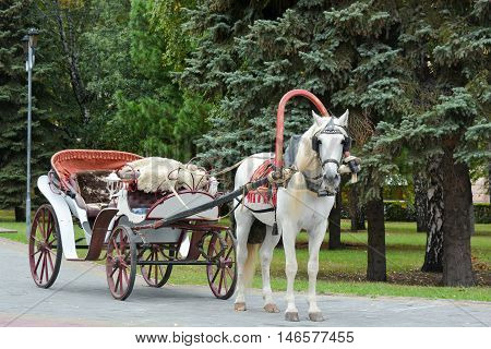 The white horse-drawn carriage in the Park