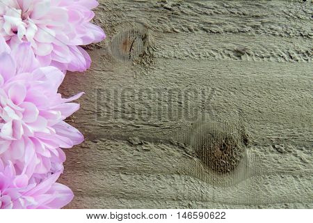 Close up of pink flowers on a wooden background with space for text