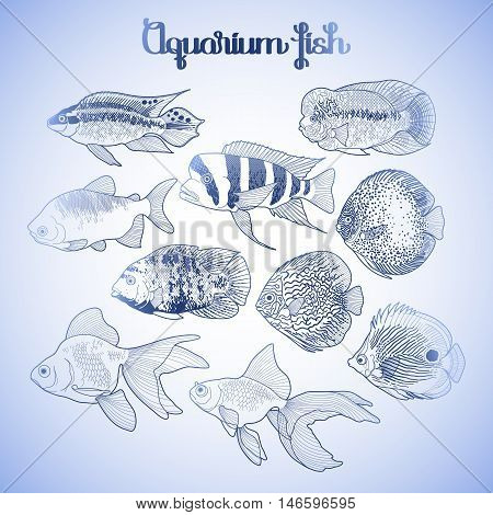 Graphic aquarium isolated fish in blue colors. Fresh water creatures.