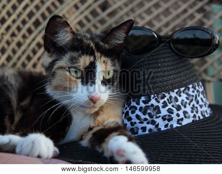 the cat spotty with a hat and glasses lies on a bench
