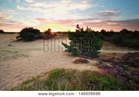 summer sunrise over dunes with wildflowers Friesland Netherlands