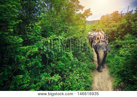 group of tourists riding elephants in thailand