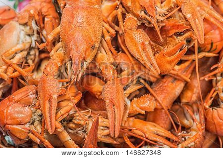a lot of hot fresh boiled red crawfish