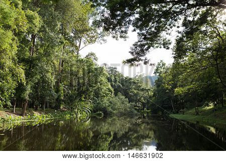 View Of Forest Beside Pond