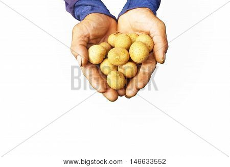 Longan growers in hand isolated white background