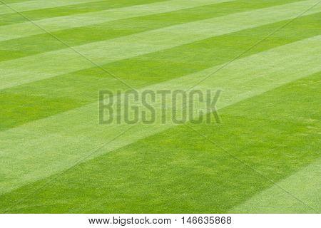 Greensward field sport landscape background and wallpaper.