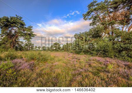 Heathland Stroothuizen