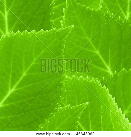 Green leaves texture and background Stack of green leaves