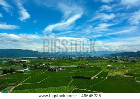 Peaceful farmland for rice paddies and lotus farming under a summer sky in Yunlin County, Taiwan