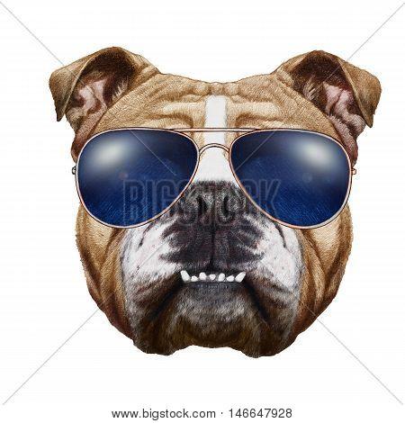 Original drawing of English Bulldog with sunglasses. Isolated on white background.