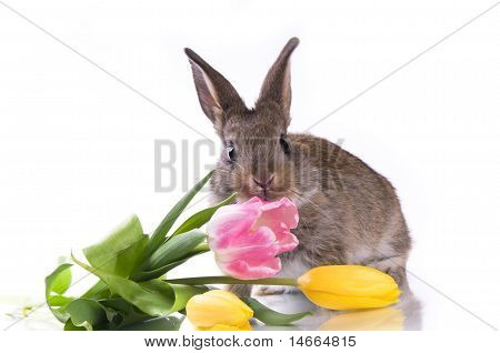 little rabbit and flowers on a white background isolation