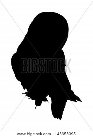 Owl Silhouette on White Background. Isolated vector illustration animal theme.