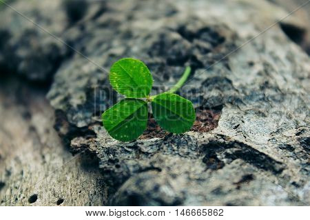 clover image showing the existence of life on earth nature vitality