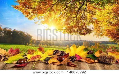 Autumn concept with colorful leaves on a wooden table in front of a sunny open landscape