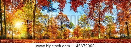 Panorama of colorful trees in a park in autumn a lively landscape with the sun shining through the foliage