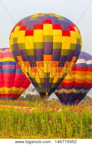 Hot air balloons floating over cosmos flowers field Chiang Rai Thailand