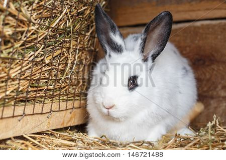 Cute White Bunny Sitting Near Basket With Hay