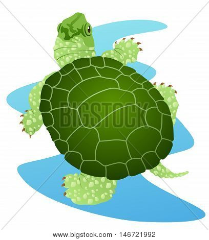 Turtle typically found in lakes and ponds