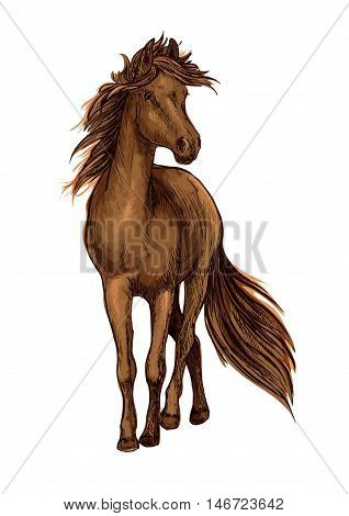 Sketch of brown horse with strong bay stallion of arabian breed with lush long mane and tail. Horse racing, equestrian sport or riding club design