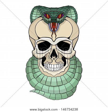 human skull entwined snake vector illustration  front side