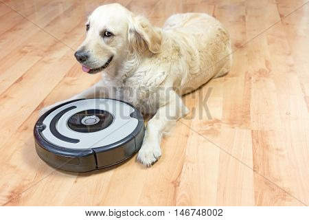 Cute Golden Retriever dog peeks at the camera lying next to the robotic vacuum cleaner on the floor. All potential trademarks and control buttons are removed.