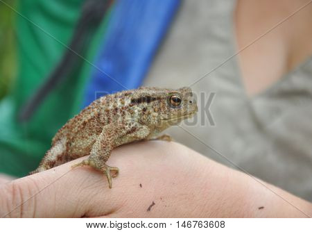 The common toad, European toad or in Anglophone parts of Europe, simply the toad