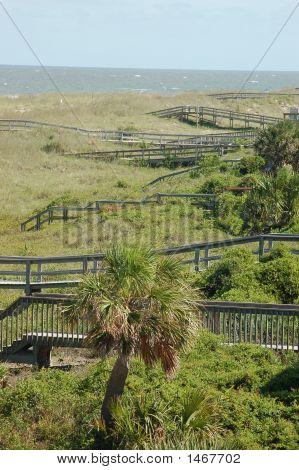 Beach Walkways And Palm Tree