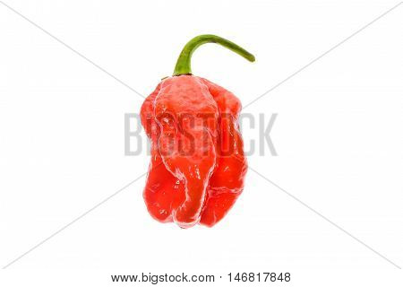 Fresh Ripe Caribbean Red Habanero Hot Chili Pepper