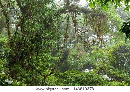 Misty rainforest in Monteverde cloud forest reserve Costa Rica