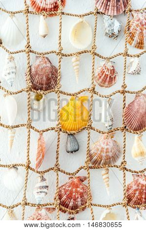 Close up of suspension of sea shell - background