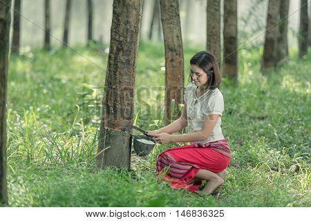 woman rubber farmer slitting rubber tree for keep latex thailand.