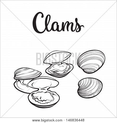 Clams, mussels, seafood, sketch style vector illustration isolated on white background. Drawing of clams as a common seafood delicacy. Edible underwater mussels, healthy organic shellfish food