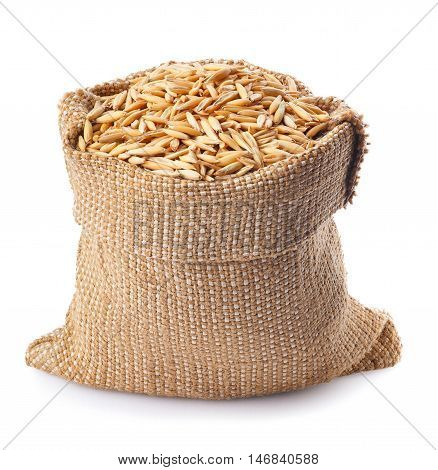 grain oats with husk in burlap bag isolate on white background. Uncooked oat grains with husk isolated on white background. Oat grains with husk. Cereal grains