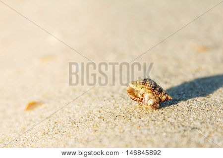 Shell on sand beach sunny blank background
