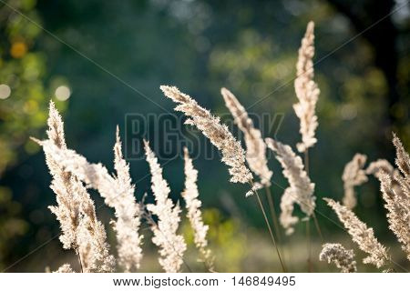 abstract dry grass on summer meadow