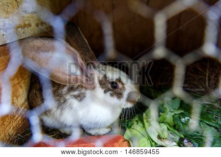 rabbit in cage close up