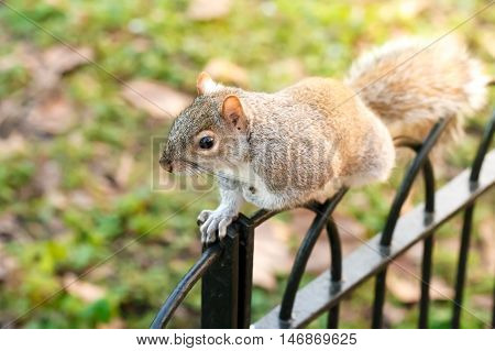 Cute Squirrel Searching For Food In Park