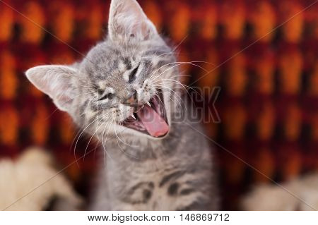 Little Cute Cat Yawning With Eyes Closed