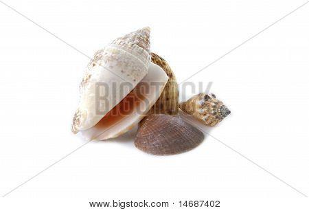 Several Sea Shells