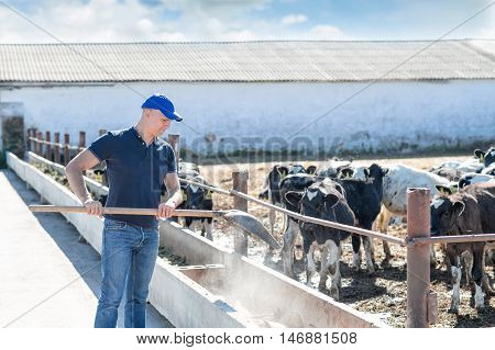 man farmer worker with a shovel feeding dairy cows at open farm