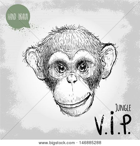 Hand drawn sketch style illustration of monkey face. Jungle VIP (Very Important person). Chinese zodiac sign. Young Chimpanzee. Vector illustration.