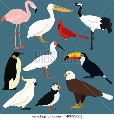 Birds collection. Crested ibis japanese red crowned crane cockatoo parrotpelicantoucanpuffinflamingopenguinbald eagle red northern cardinal.