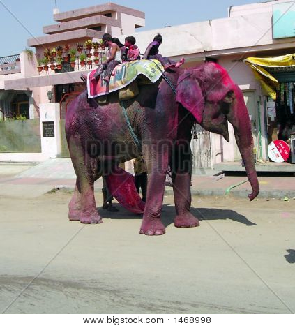 Elephant On The Street - At The Day Of Holi