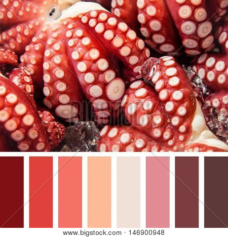 A background of fresh octopus, in a colour palette with complimentary swatches.