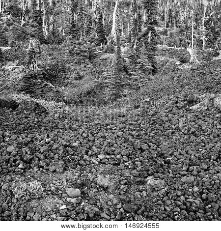 High mountain fir trees find purchase in hilly lava rock in the Cascade Mountains of Oregon.
